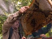 Cuba realizará convención internacional sobre apicultura