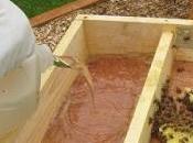 Alimentación nutrición??? manejo colmena food nutrition beehive management.