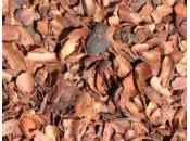 Propiedades usos cáscara cacao