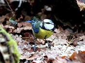 elves forest birds-aves duendes bosque Orgi