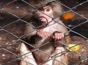 zoológico… imágenes obsenas...Y demás breve crítica esta institución…