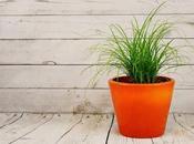Plantas medicinales puedes plantar balcón