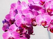 Orquídeas: fuentes energía
