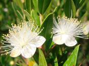 Terapia Floral Chilena