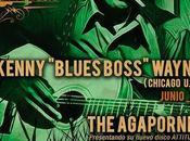 """Crónica concierto kenny """"blues boss"""" wayne sala guateque, festival blues bahía"""