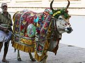 vaca sagrada tabú freudiano