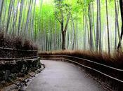 Bambú, Yoga Zen. Internacional 2017