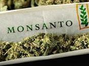 Monsanto Bayer, ¿Quieren Hacerse Industria Cannabis?
