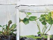 Jardines acuaticos interior