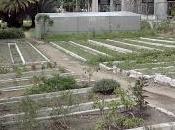 RECREO -LOS CULTIVOS URBANOS incentivo para mejorar producción, arma contra escases alimentos