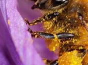 ¿por están muriendo abejas?