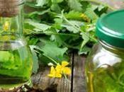 ¿Cuáles mejores plantas diuréticas?