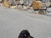 Puerto Vega perro (Asturias)