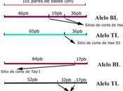 Actividad aprendizaje Marcadores Moleculares: Detección defecto genético bovinos mediante pruebas