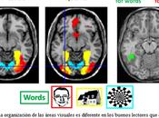 """Breve revisión estudio bases neurobiológicas para explicar fonología relación conciencia fonológica"", Paola Vásquez Espinoza"