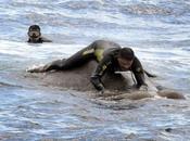Elefante rescatado alta después arrastrado fuerte corriente