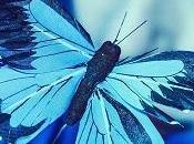Carol Albert Away Butterfly