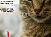 Kedi (Gatos Estambul). convivencia entre hombre gato.