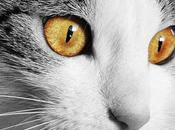 Queratitis Gatos, Como Reconocer Esta Enfermedad Infecciosa Nuestra Mascota.
