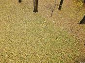 Manto hojas casi minimalismo estacional