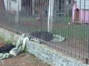Perrita hogareña compartió manta frío perro callejero