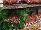 Estrasburgo capital Alsacia