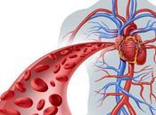 Enfermedades Vasculares están Relacionadas Genéticamente