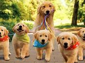 Descubre cuál EDAD HUMANA perro