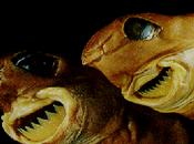 Pequeño pero feroz: Tiburón cigarro