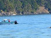 Vimos orcas Victoria!