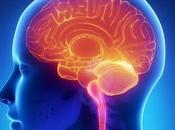 Memoria Trabajo puede compensar falta Atención