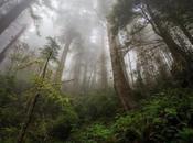 SEMARNAT autorizó destrucción Bosque Niebla