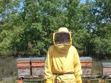 Mientras europa tiene apicultores profesionales, españa posee 17,6%.
