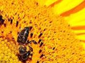 abejas comprenden concepto cero (investigación)