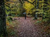 Interpretando bosque
