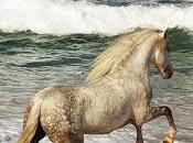 Corre caballo...