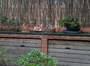 Terraza nueva para bonsais