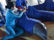 FOTOS: Evacuan delfines Cayo Guillermo