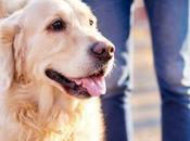Caminar perro: mejor salud para perros dueños