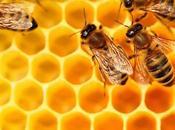 miel variedades