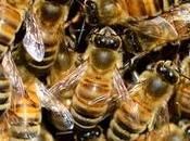 extinguieran abejas?