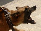 Perros Infierno Animales Domésticos Familia: Sueño Profético sobre Libertad Radical