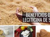 Beneficios lecitina soja Quemador grasa natur...