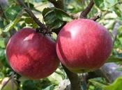 Cómo plantar árboles frutales jardín
