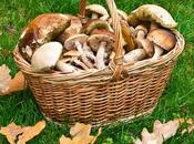 Tesoros nutricionales ofrece bosque otoño
