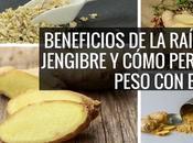 Beneficios raíz jengibre cómo perder peso