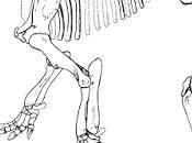 Paleoficha: Titanoides