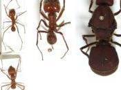 Hormigas voladoras.