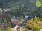 Escapada Otoñal: País Vasco Francés Selva Irati