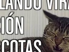 Korah publica nuevo vídeo doblajes virales dedicado mascotas
